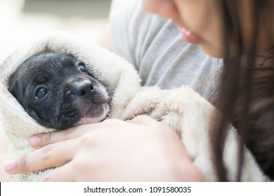 cute female asian Thai girl kid teen hug hold new born half french bulldog puppy dog in towel like a baby with copy space pet and animal mental healthcare therapy concept