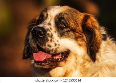 cute female Moscow watchdog