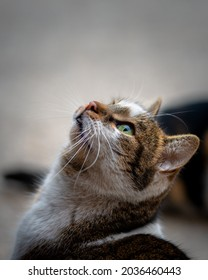 Cute Female stray cat with beautiful green eyes, close-up photo of cat animal