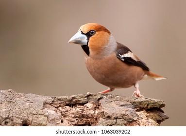 Cute finch bird sitting on a branch in spring