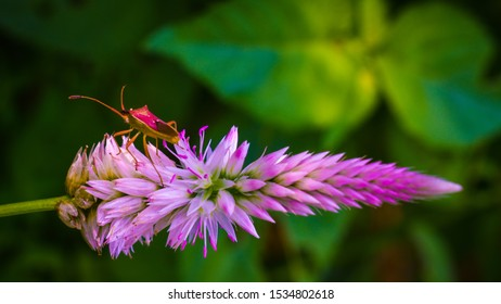 Cute flower with insect ina a green background can be use as wallpaper