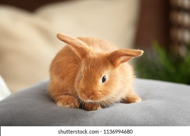 cute bunny images stock photos vectors shutterstock