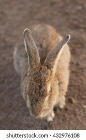 Cute fluffy bunny who eats asparagus