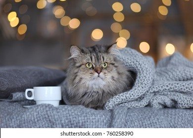 cute fluffy cat relaxing at home