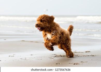Cute fluffy dog playing on the beach