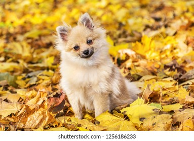 Cute fluffy dog sitting in autumn park