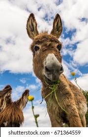 Cute fluffy donkey eating grass in a spring meadow