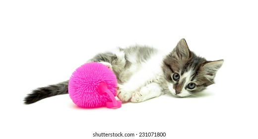 cute fluffy kitten and ball of pink color isolated on white background. horizontal photo.