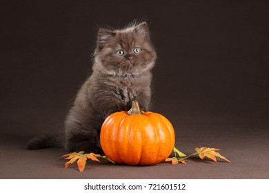 Cute fluffy kitten with a pumpkin on a brown background