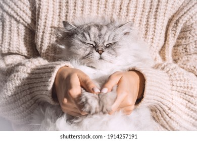 Cute fluffy relaxed cat sleeping in the arms. Love cats and humans. Cat cozy sleep in owner arms.