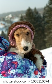 cute fox terrier in a funny knitted wool overall with a hood looks out from behind the shoulder of his mistress