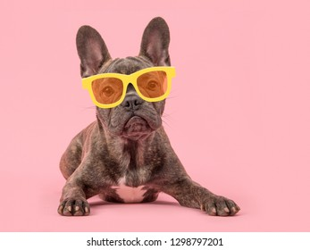 Cute french bulldog seen from the front lying on a pink background wearing yellow glasses