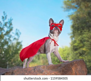cute french bulldog in a super hero costume
