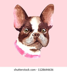 Cute french bulldog. Watercolor portrait