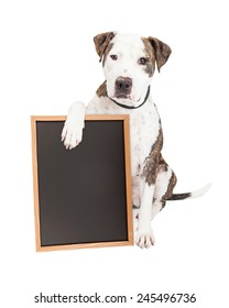 Cute and friendly Pit Bull Dog holding a blank chalkboard to enter a message onto