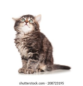 Cute frightened kitten isolated on white background