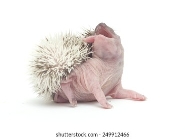 cute and fun hedgehog baby