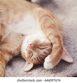 Cute and funny animal concept,cozy home background.Chubby ginger tabby cat sleeping in funny pose.Front leg on his head.Lying comfortable on light brown blanket.