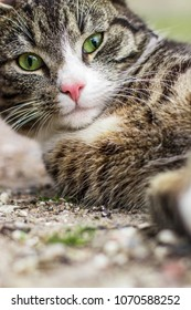 Cute and funny cat with a beautiful eyes makes selfie