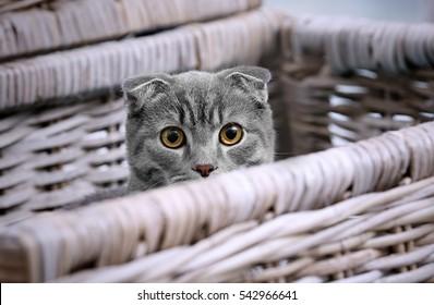 Cute funny cat hiding in wicker box at home