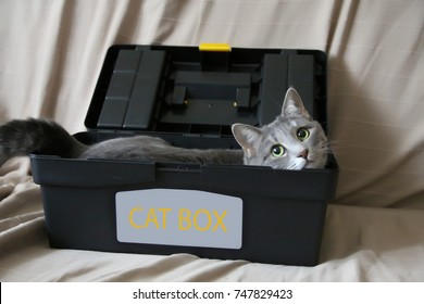 cute funny cat is lying in a box