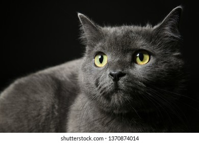 Cute funny cat on dark background