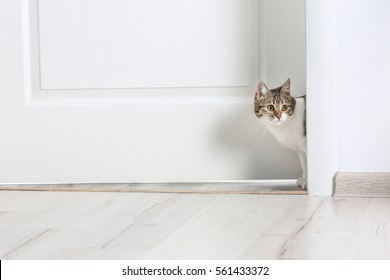 Cute funny cat walking through door at home