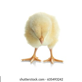 Cute funny chicken on white background