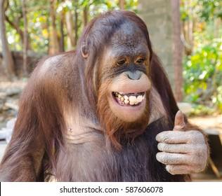 cute and funny chimpanzee