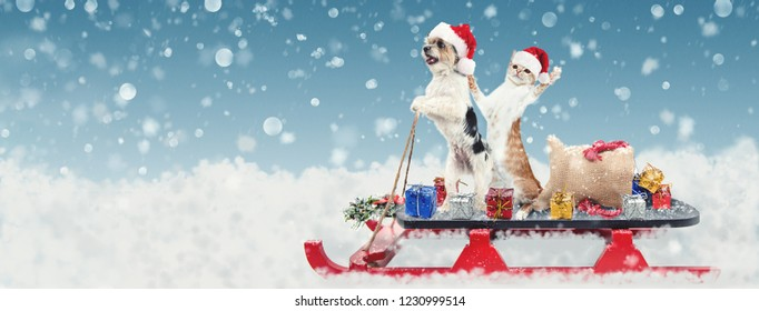 Cute funny dog and cat riding on a sleigh to deliver Christmas gifts in a snowy winter scene