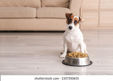Cute funny dog near bowl with dry food at home
