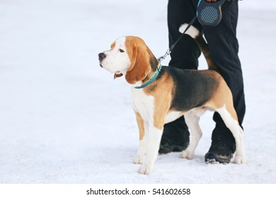 Cute funny dog with owner outdoors on winter day