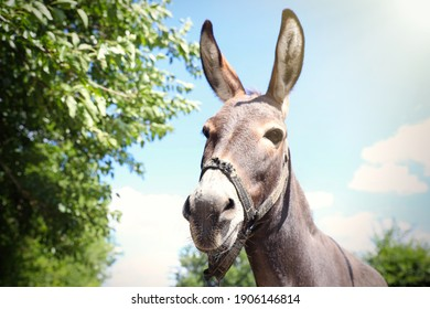 Cute funny donkey outdoors on sunny day. Beautiful pet