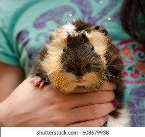 Cute funny guinea pig in child hands (selective focus on the guinea pig head)