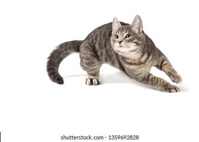 Cute funny kitten running around on white background