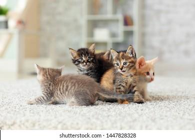 Little Cat Hd Stock Images Shutterstock