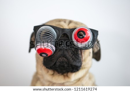 cute funny pug wearing googly eyes stock photo edit now 1211619274