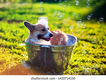 cute funny puppy dog standing in a metal basin, is cooled, washed on the street in the summer on a hot Sunny day with shiny soap bubbles