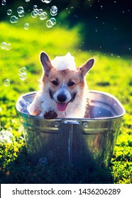 cute funny puppy dog standing in a metal basin washed on the street in the summer on a hot Sunny day with shiny soap bubbles and foam