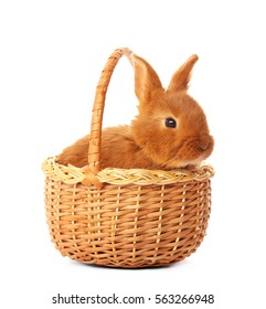 Cute funny rabbit in basket on white background