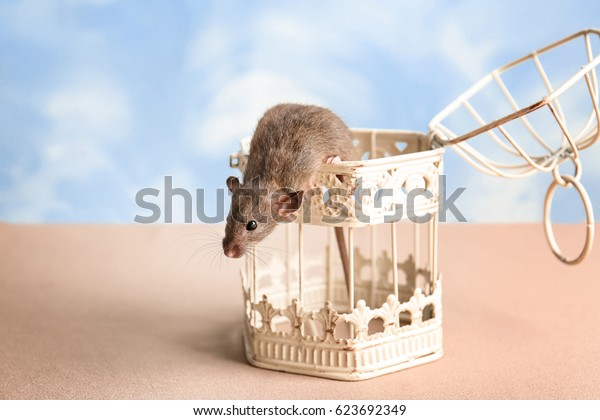 Cute funny rat and open cage on table