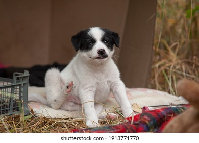 Cute funny white puppy with clack spots on face on blanket in hay