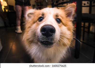 cute and funny-looking dog red face