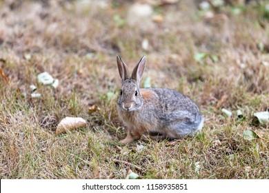 Cute furry bunny