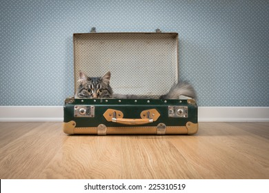 Cute furry cat in an open vintage suitcase on hardwood floor against retro wallpaper.