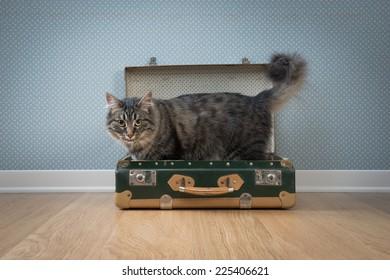 Cute furry cat in an open vintage suitcase on hardwood floor against retro wallpaper.
