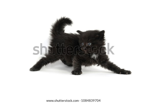 Cute fuzzy black 4-week-old kitten isolated on white background