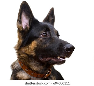 Cute German shepherd with a funny expression looking sideward (isolated on white)