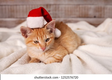 Cute ginger cat getting in the christmas mood - wearing a santa hat lying on white blanket