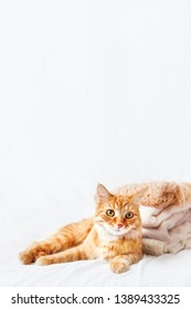 Cute ginger cat  lies near a pile of beige woolen clothes on a white background. Fluffy pet staring in camera near warm knitted sweaters and scarfs which are folded in one heap. Cozy home background.